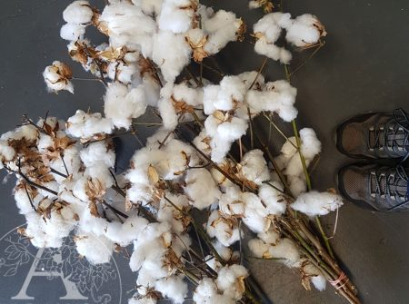Cotton bunches Gold Coast