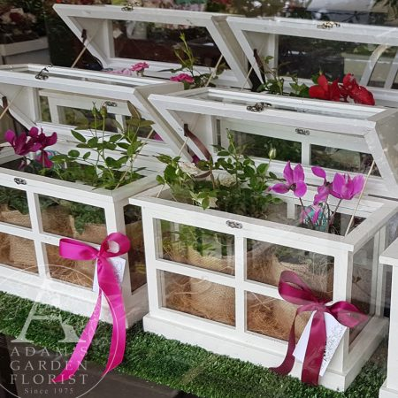Mini wooden Glasshouse with flowering plants Parkwood Florist