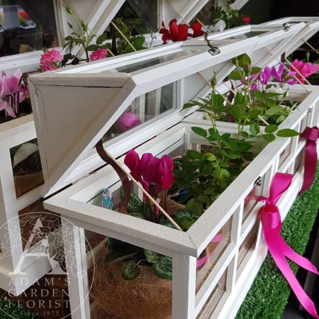 Mini wooden Glasshouse with flowering plants Gold Coast