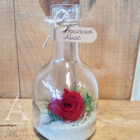 preserved-rose-bottle Gold Coast gift