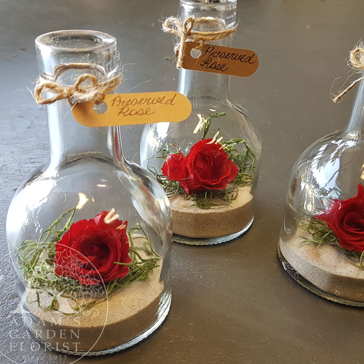 preserved-rose-bottle-Gold Coast delivery