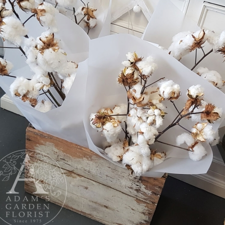 cotton-bunch Gold Coast flower delivery