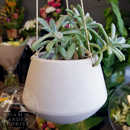 succulent-pot Gold Coast gift delivery